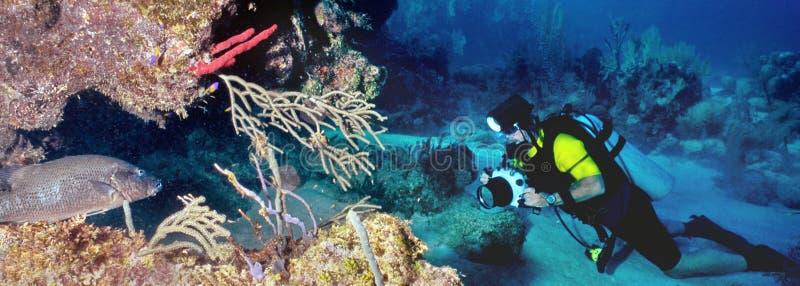 Unterwasserphotograph und Fische stockfotografie