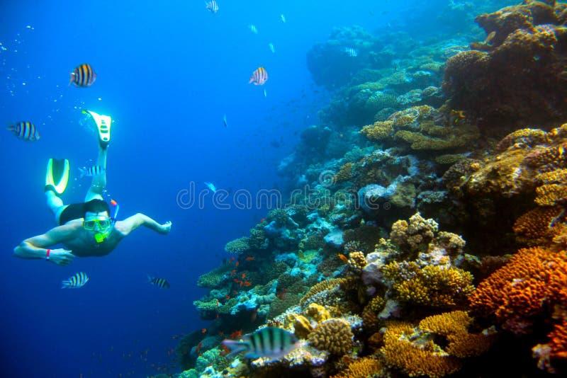 Unterwasserschießenmann nahe Korallenriff mit tropischen Fischen lizenzfreie stockbilder