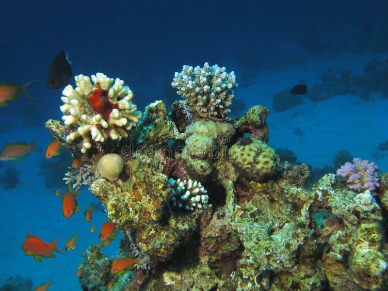 Unterwasserszene. stockfotografie
