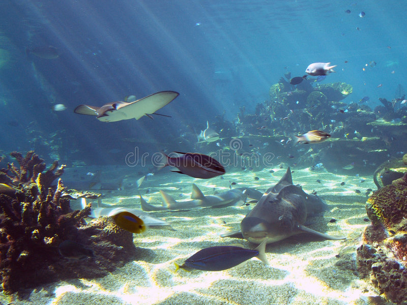 Unterwasserszene 2 lizenzfreie stockbilder