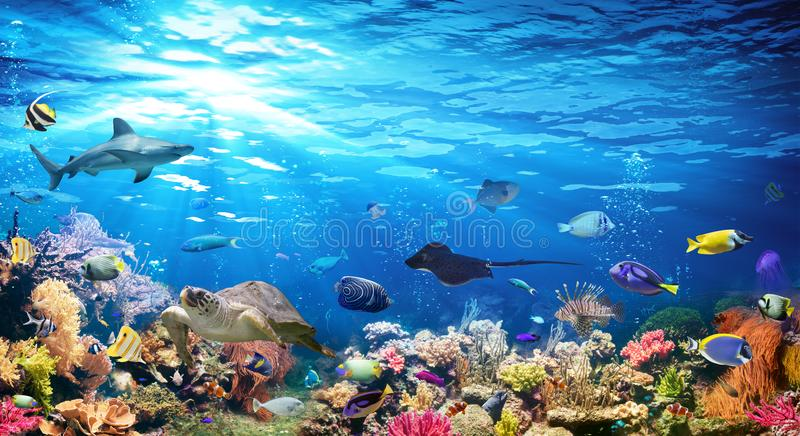 Unterwasserszene mit Korallenriff stockfotografie