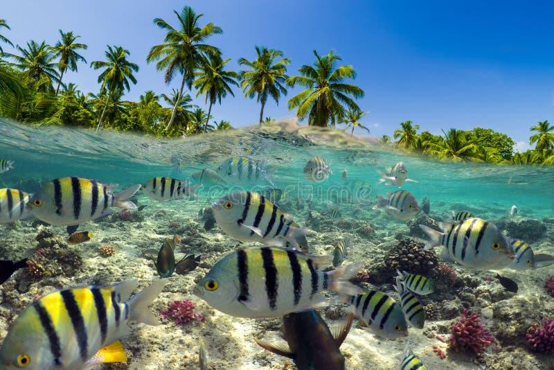 Unterwasserszene mit Riff und tropischen Fischen lizenzfreies stockfoto