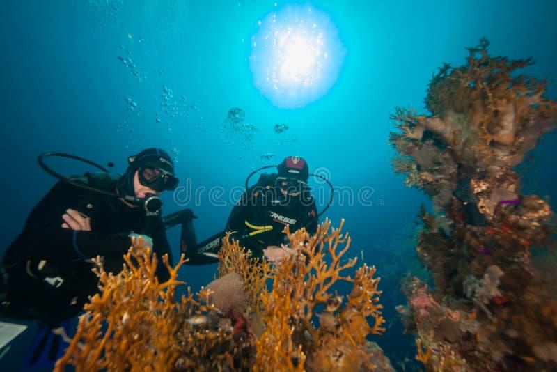 Unterwasserwelt lizenzfreies stockfoto