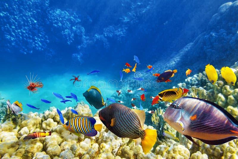 Unterwasserwelt mit Korallen und tropischen Fischen stockfotografie