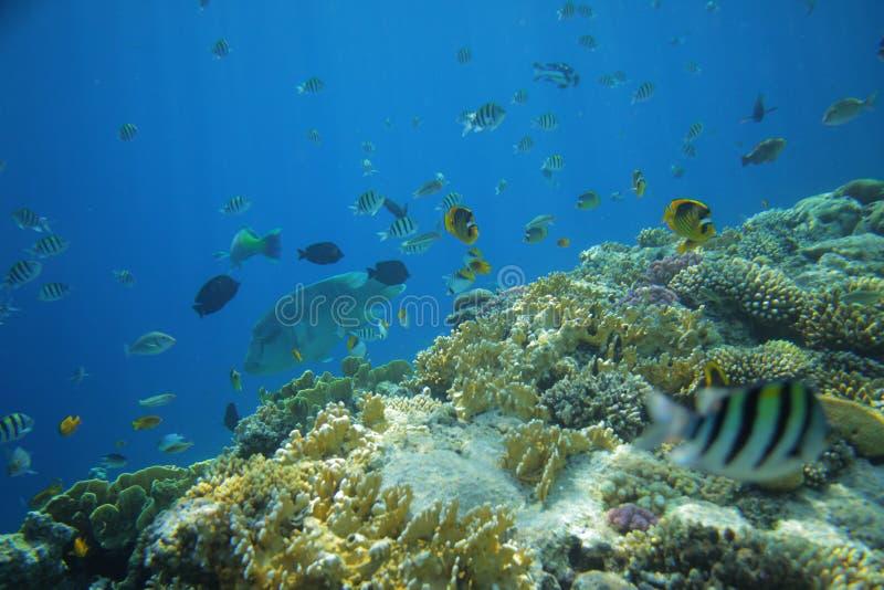 Unterwasserwelt von Fischen stockfoto