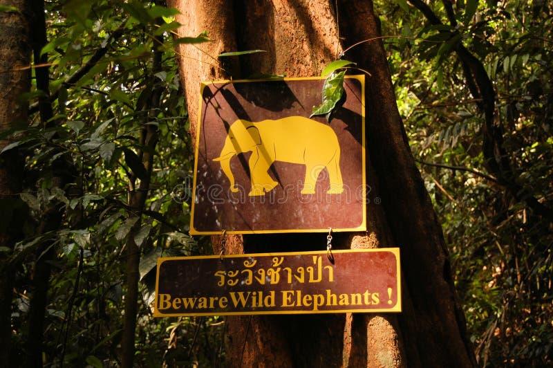 Unterzeichnen Sie Warnung von wilden Elefanten, Khao Sok, Thailand lizenzfreie stockfotografie
