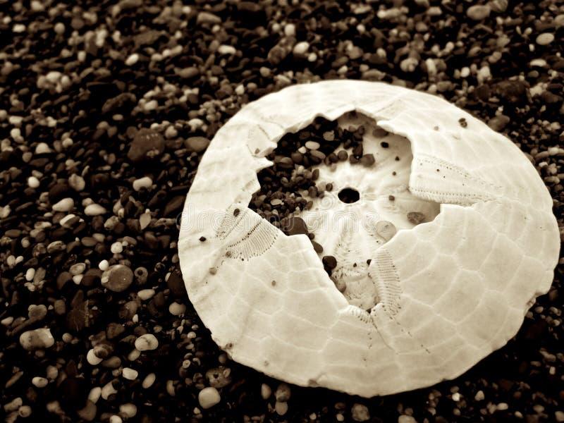 Download Untitled stock photo. Image of beach, sanddollar, ocean - 85133868