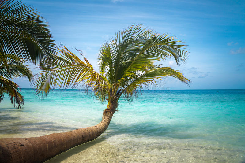 Untouched tropical beach. In Maldives stock images