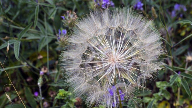 Unusal bloemen stock fotografie