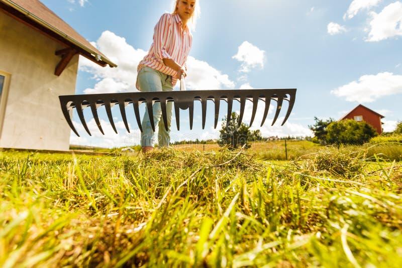 Unusual angle of woman raking leaves royalty free stock image