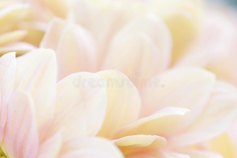 Unusual Beautiful tender white and pink flowers background. Unusual Beautiful tender white and pink flowers blurred close up background stock photo