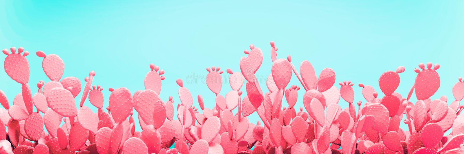 Unusual Blue Cactus Field On Pink Background royalty free stock photo