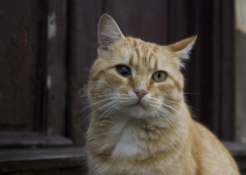 Unusual cat with creepy eyes. Cat with a flaw stock photo