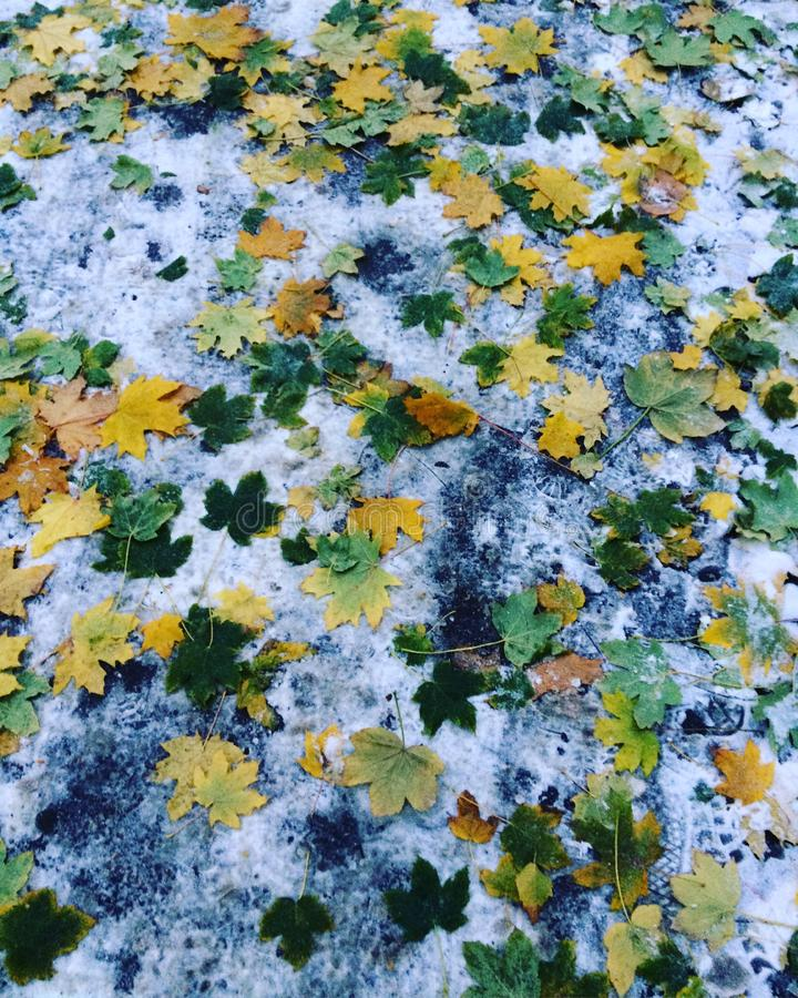 An unusual combination of summer, autumn and winter in one day. The first day of winter in the fall. The first snow royalty free stock images
