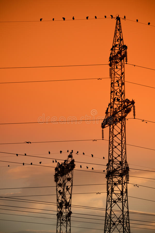 Unusual cormorant colony