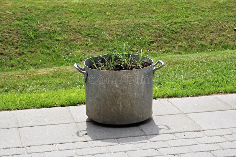 Unusual flower pot from a large aluminum old pan and young greens royalty free stock photography