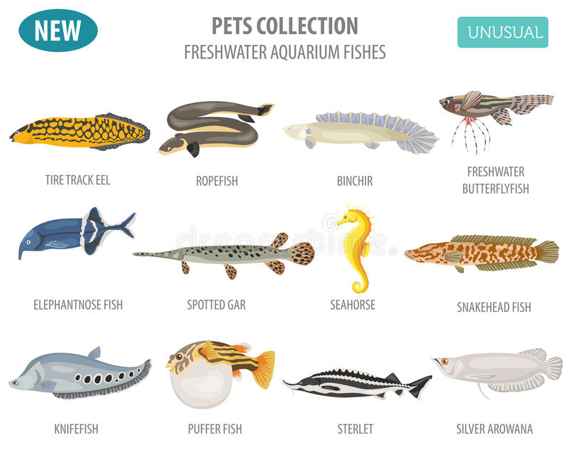 Unusual freshwater aquarium fish breeds icon set flat style isolated on white. Create own infographic about pet. Vector illustration royalty free illustration