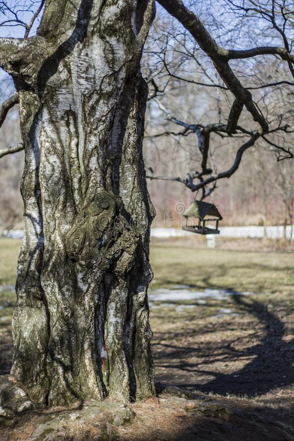 A tree lit by the sun and a bird feeder weighing on dark branches against royalty free stock photo