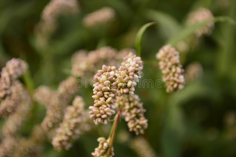 Unusual plant with seeds. Close-up stock photography