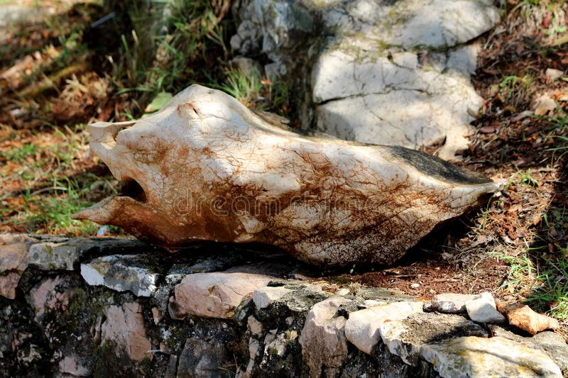 Unusual shaped rock formation resembling fish with face mouth nose and eyes resting in shade of large tree on traditional stone royalty free stock image