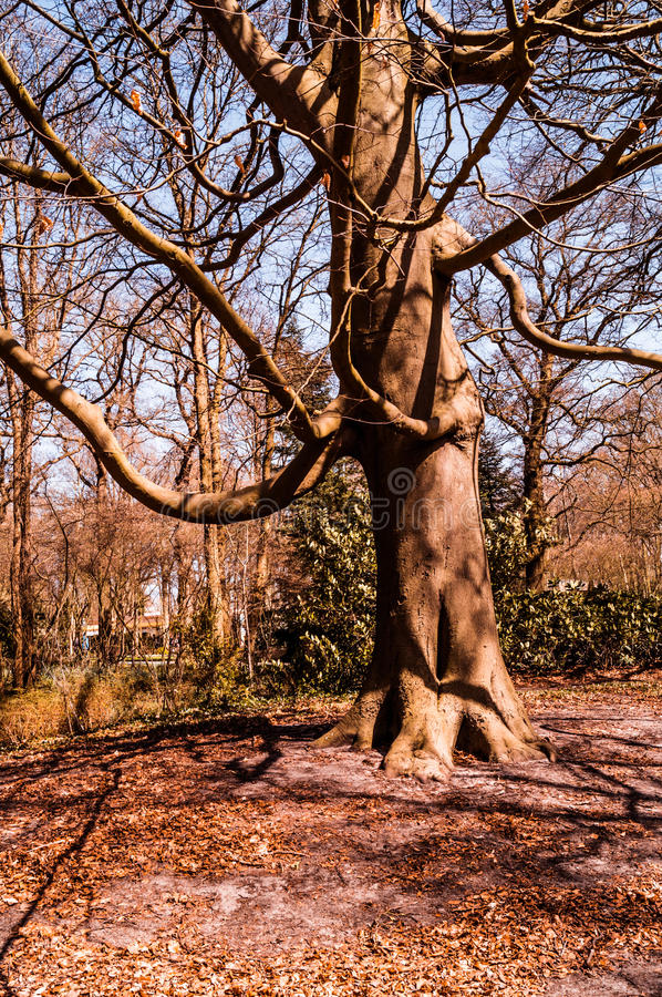 Unusual tree in the park royalty free stock image
