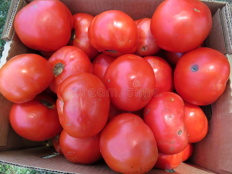 Unvollständige Tomaten zu einem Händlerpreis lizenzfreie stockfotos