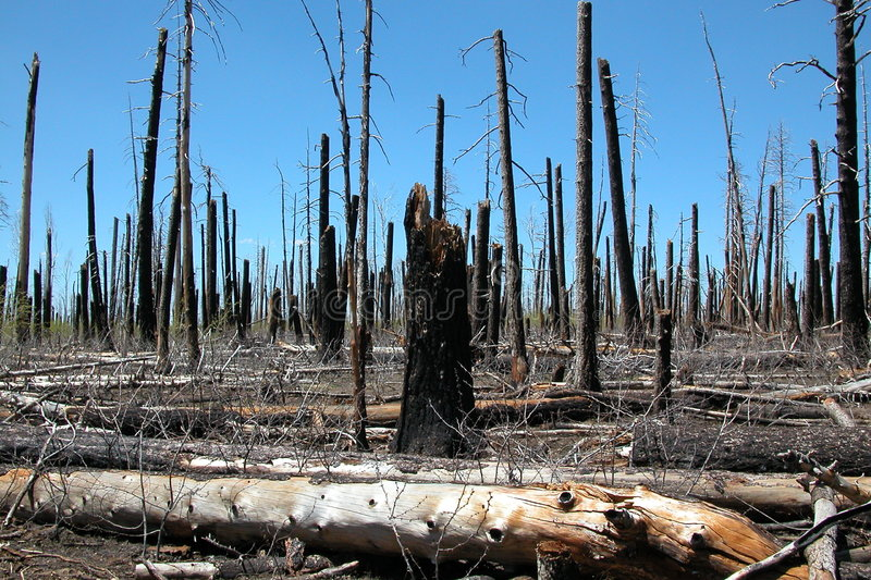 Unvorsichtiger Waldbrand lizenzfreie stockbilder