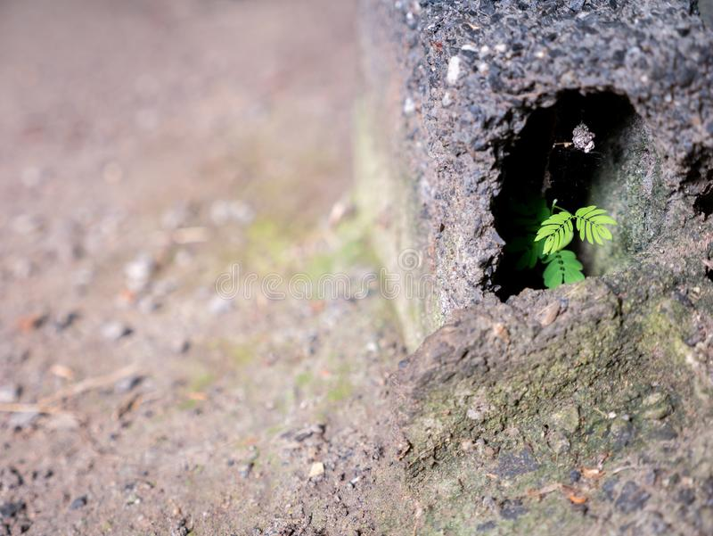 The Unwanted Flora Growing. On The Old Brick in Arid Land stock images