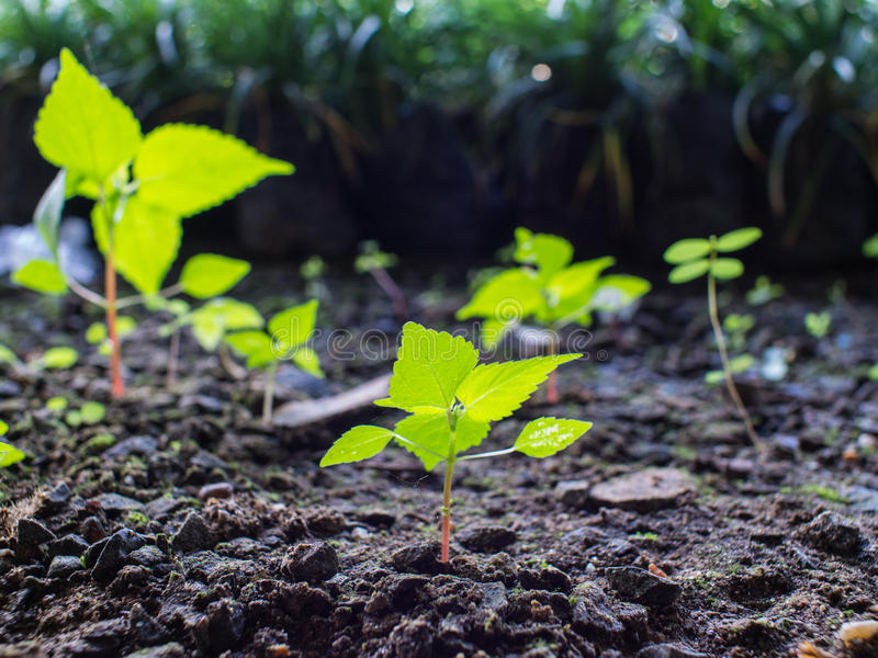 Unwanted Plant Growing. On The Ground royalty free stock photos