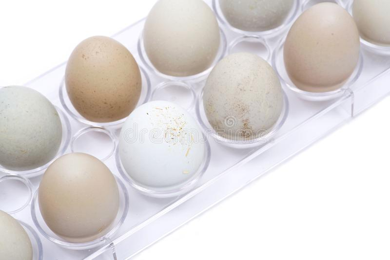 Unwashed fresh organic gmo and soy free pasture raised chicken eggs warm cozy winter gloves. Unwashed fresh organic gmo and soy free pasture raised chicken eggs stock photos
