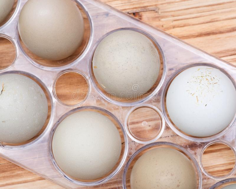 Unwashed fresh organic gmo and soy free pasture raised chicken eggs warm cozy winter gloves. Unwashed fresh organic gmo and soy free pasture raised chicken eggs royalty free stock photography