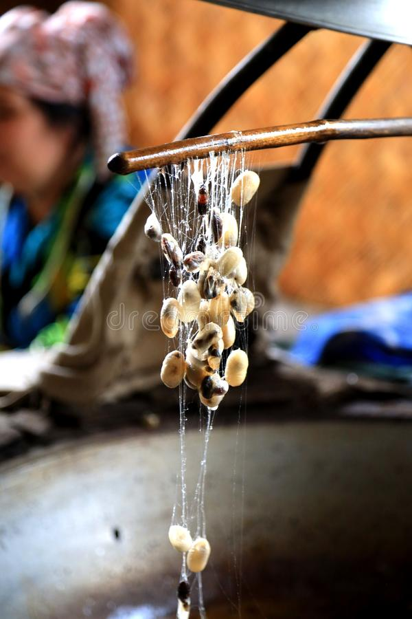 Unwinding Silk From Cocoons royalty free stock image