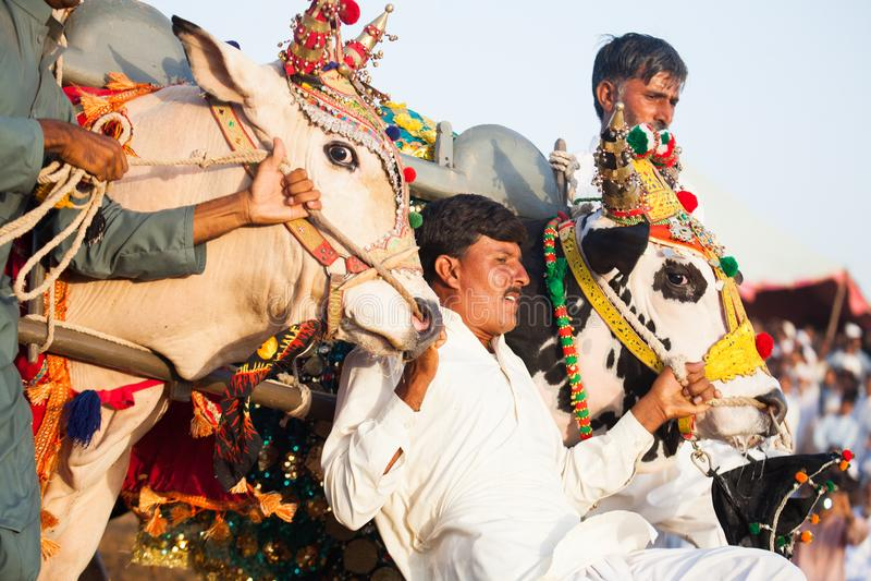 Uomini che controllano i tori ad un competetion della corsa del toro fotografia stock