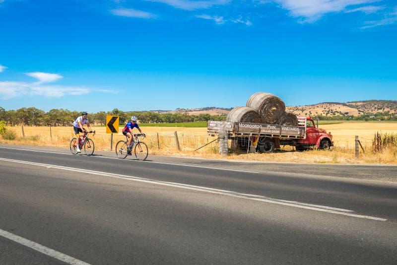 Uomini che guidano le biciclette in Barossa Valley, Australia Meridionale fotografie stock libere da diritti