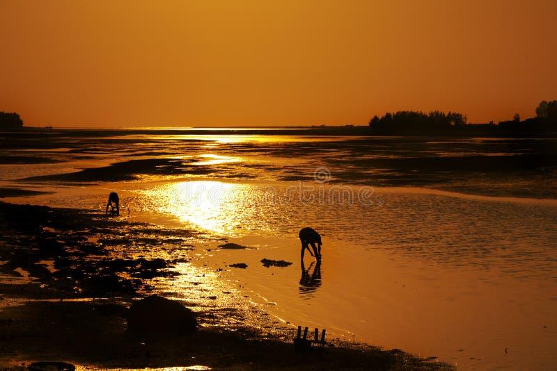 Uomini del Fisher nell'ambito del tramonto immagine stock