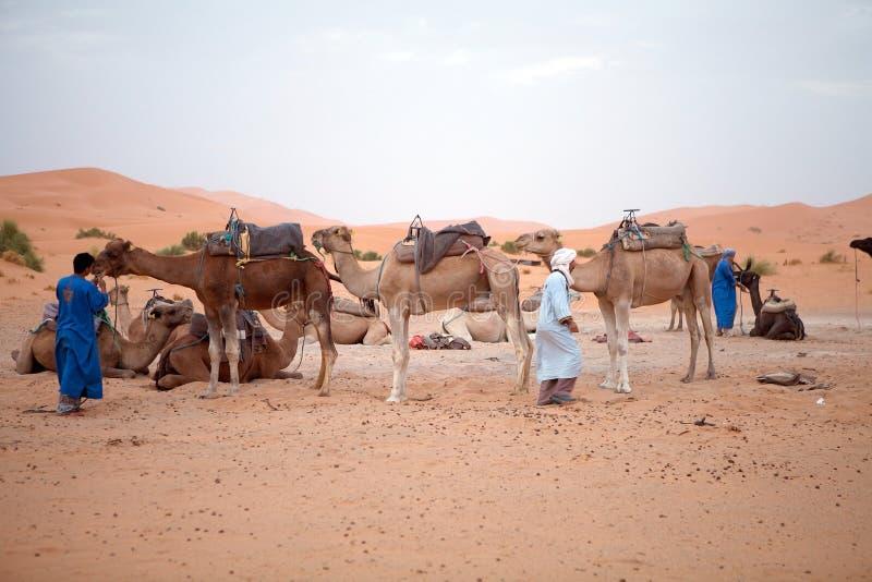Uomini di Berber con i cammelli immagine stock