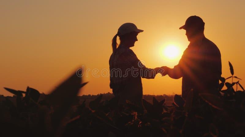 Uomini e donne agricoltori della stretta di mano Sul campo al tramonto immagini stock