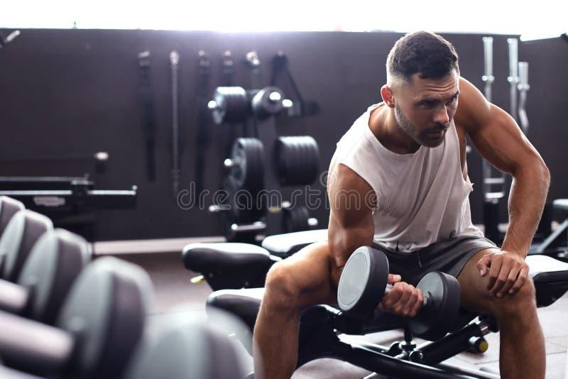 Uomo adatto e muscolare che fa gli allenamenti del bicipite con le teste di legno in palestra, spazio della copia immagini stock libere da diritti