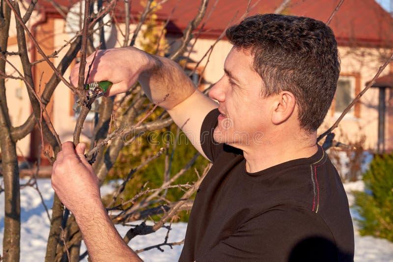Uomo adulto con i tagli a disposizione che pota i rami di albero in molla in anticipo immagini stock libere da diritti