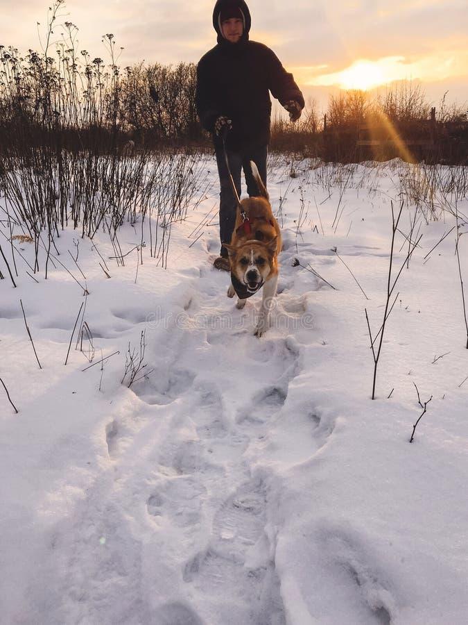 Uomo alla moda dei pantaloni a vita bassa che corre con il cane dorato sveglio in parco freddo nevoso Uomo che gioca con il suo c immagini stock libere da diritti