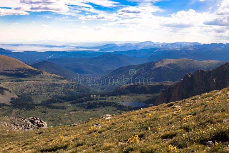 Uomo anziano dei fiori della montagna fotografia stock