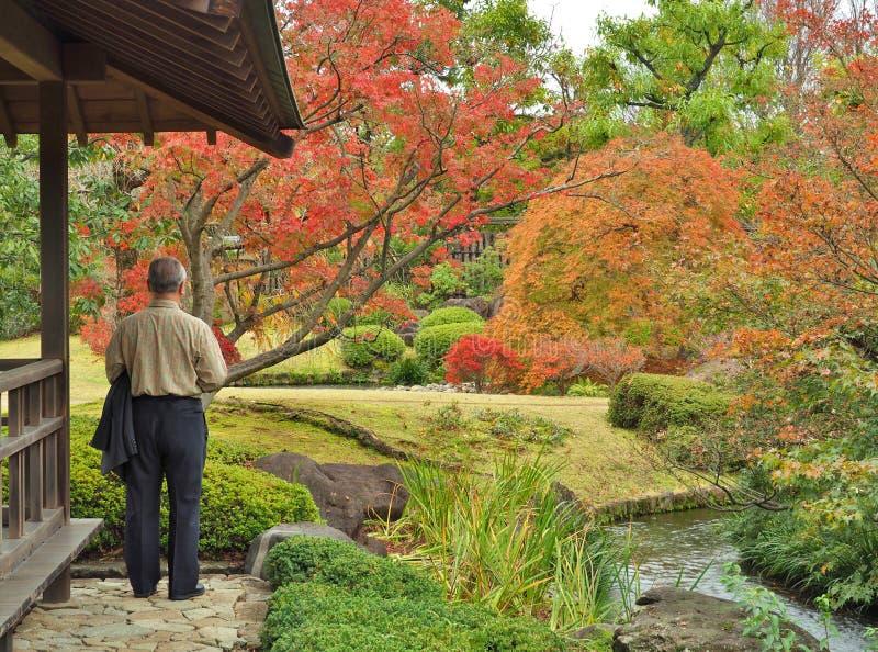 Uomo anziano solo che guarda al giardino in autunno fotografia stock