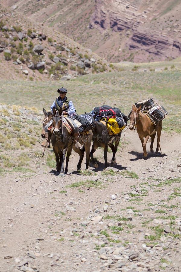 Uomo argentino ed asini che portano le borse all'Aconcagua, Argentina immagine stock libera da diritti