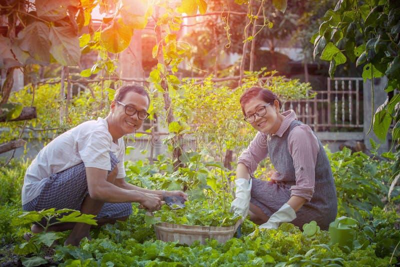 Uomo asiatico e donna che si rilassano e che raccolgono verdura organica i immagini stock