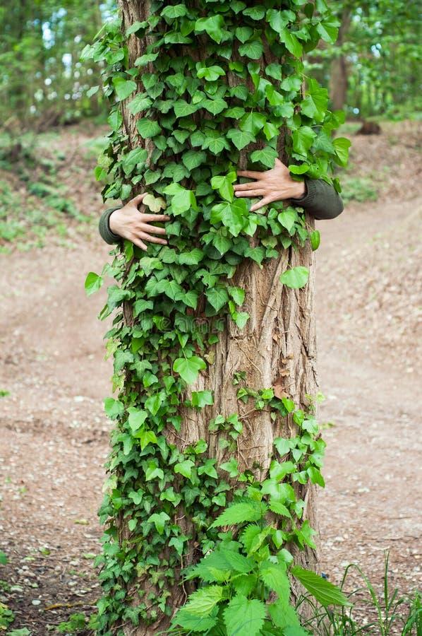 uomo che abbraccia un tronco di albero coperto dalle foglie dell'edera in una foresta fotografie stock