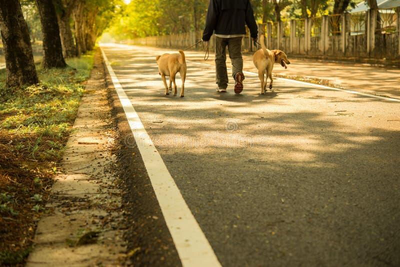 Uomo che cammina i suoi due cani nella sera fotografia stock