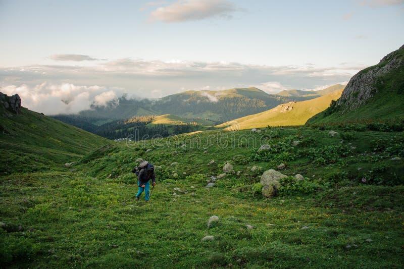 Uomo che cammina sul campo di erba verde con l'escursione zaino e dei bastoni sulla collina fotografia stock libera da diritti