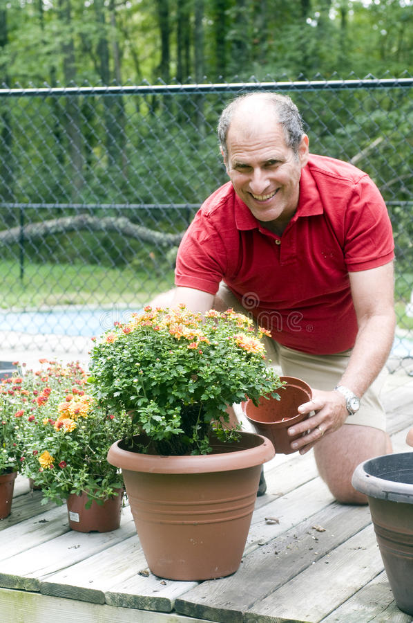 Uomo che fa il giardinaggio piantando le mummie fotografia stock