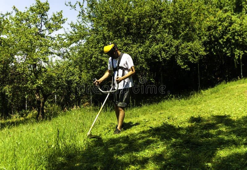 Uomo che falcia campo selvaggio verde fotografia stock libera da diritti