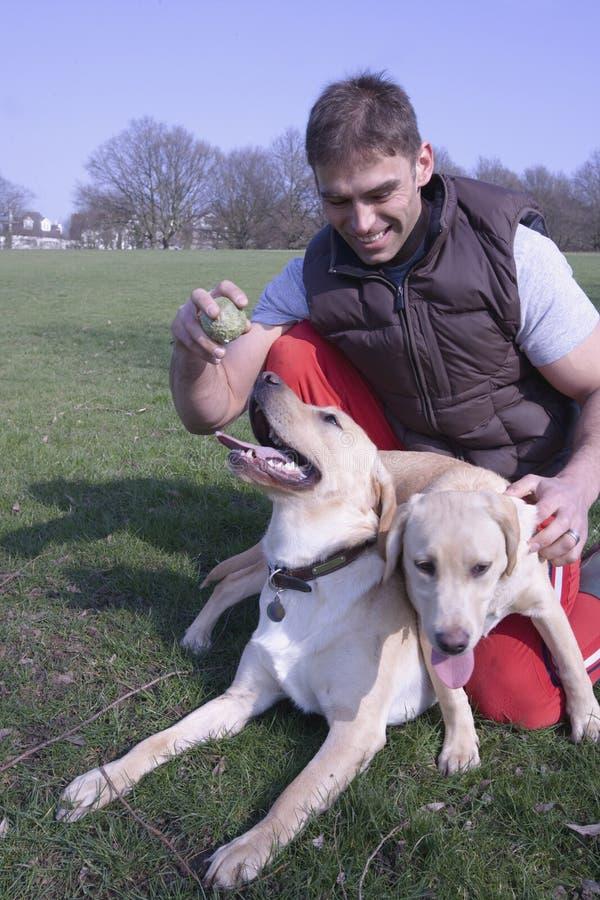 Uomo che gioca con i cani di animale domestico fotografia stock libera da diritti